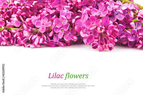 Lilac bunch, spring flowers isolated on white background