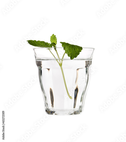 Water with Lemon Balm