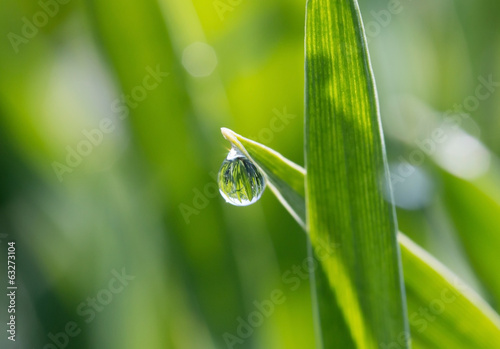 The dewdrops on green grass in the sunshine