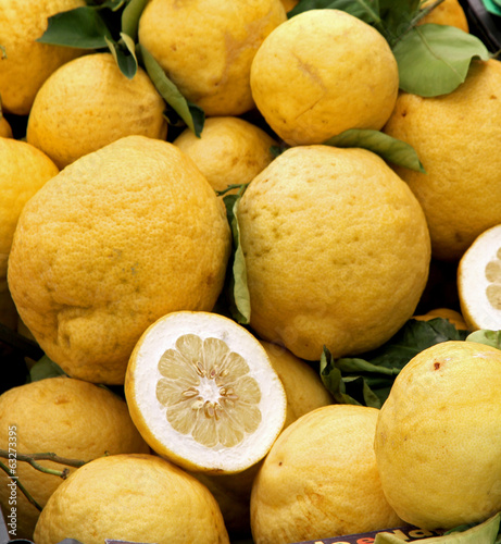 Yellow grapefruits of Sicily just collected from the lush tree o