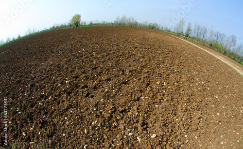 newly sown grain field in spring