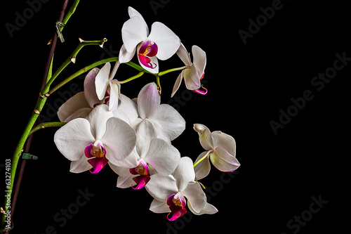 Beautiful orchid on dark background