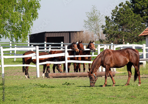 horses in corral on ranch