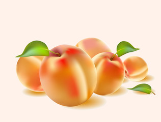 realistic vector banner apricot