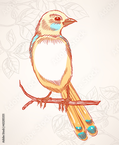 cute yellow and turquoise bird