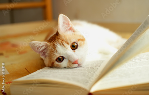 Red and white kitten lies quietly on the open book.