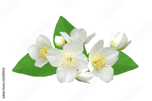 White flower (jasmine) isolated on white background.