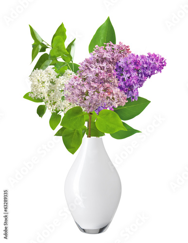 Beautiful Bunch of Lilac in the Vase isolated on white