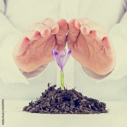 Man protecting a sprouting spring freesia
