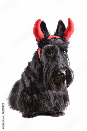 Dog with horns