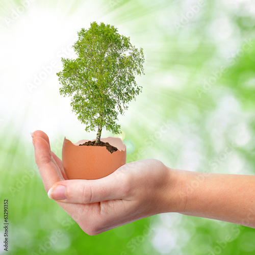 Hand holding tree growing out of the egg .New life concept.