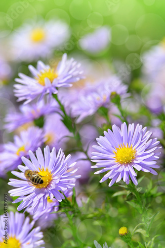 Spring flowers with bee