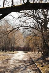 footpath with fallen leaves under broken tree
