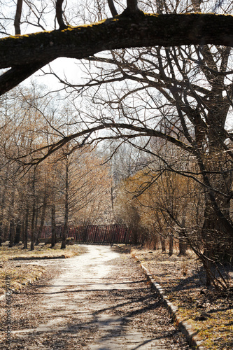 footpath with fallen leaves under broken tree