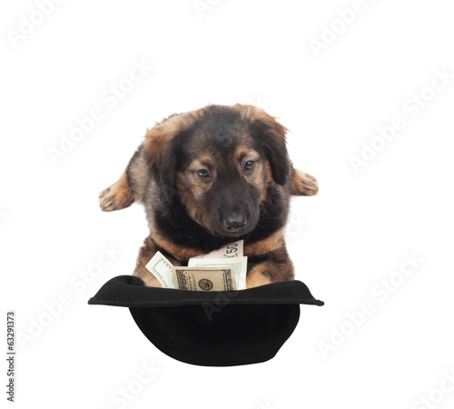 fluffy puppy and hat with money on white background