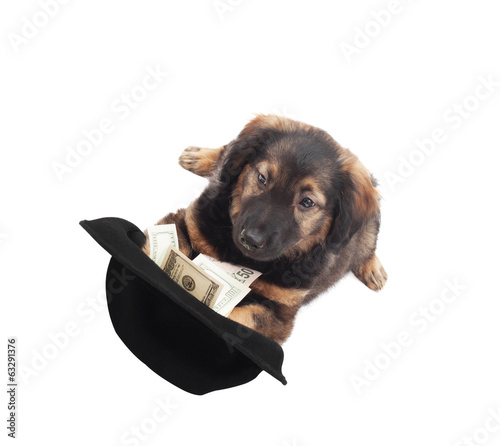 puppy and hat with money on white background
