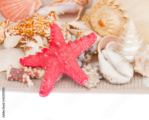 starfish and seashells border