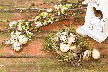 Vogelnest mit Wachteleiern auf Holz mit Vogelhaus