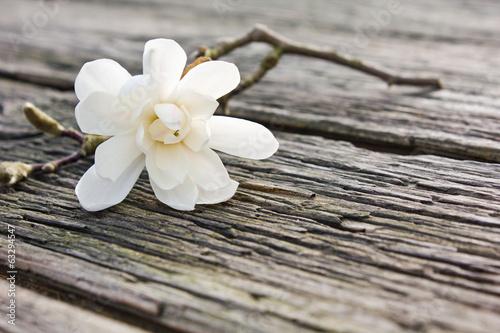 magnolia © Cora Müller