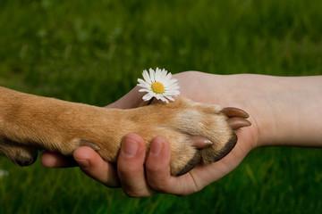 Hundepfote in Kinderhand Freundschaft Liebe