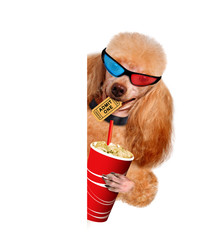 Dog watching a movie.