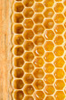 Honey cells.