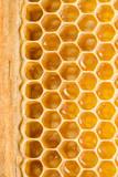 Honey cells.