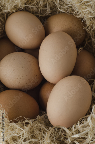 Brown Eggs Grouped