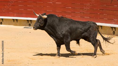 Staande foto Stierenvechten Toro De Lidia Español