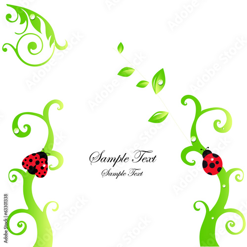 Ladybirds and dew vector