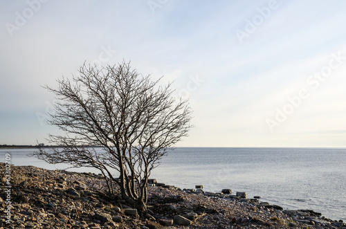 Lone tree at a rocky coast