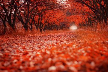 Path in autumn garden