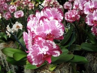 Garden: exotic orchid grown in greenhouse environment