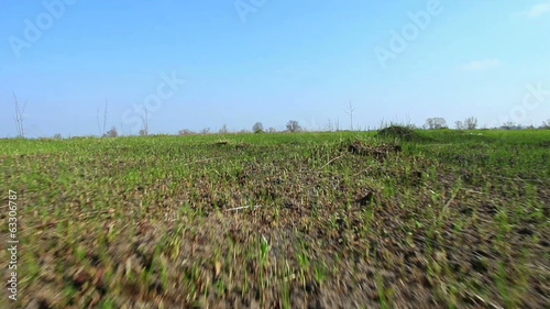 Rural steppe with  green grass . Stabilized  animal view