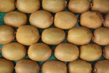 Rows of Fresh Kiwifruits