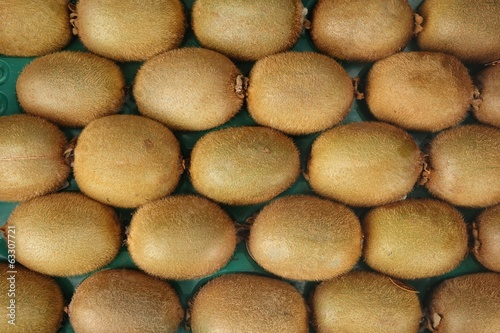 Rows of Fresh Kiwifruits