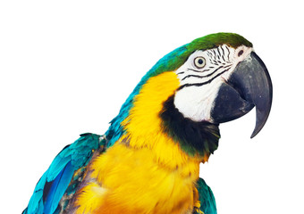 Head of  macaw over white background