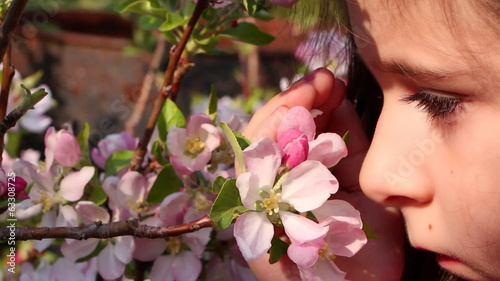 Little girl is smelling an apple blossom, closeup