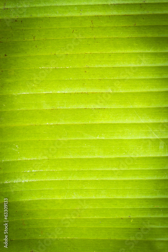 Green palm leaf background with vignette effect