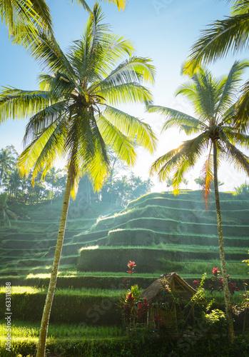 Canvas Indonesië Rizière en terrasse, Bali, Indonésie
