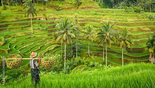 Aluminium Asia land Bali, rizière en terrasse