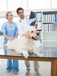Veterinarians discussing Xray of dog