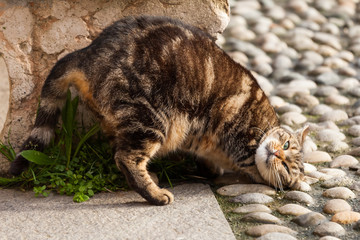 Straßenkatze juckt sich den Rücken