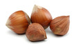 Hazelnut Group