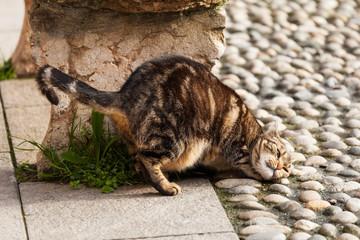 Straßenkatze kratzt sich den Rücken