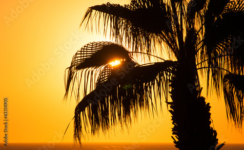 Beautiful sunset sky at the sea, palm tree