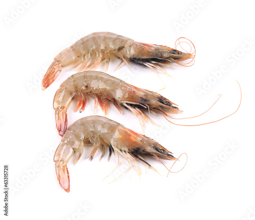 Close up of three fresh shrimp