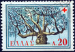 Hippocrates Plane tree, Cos island (Greece 1959)