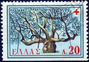 Hippocrates Plane tree, Cos island (Greece 1959)