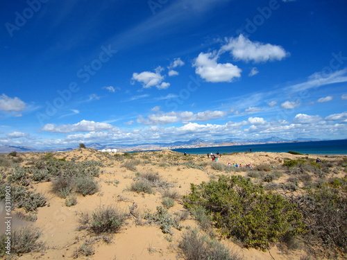 dunes and mediterranean coastal flora Alicante